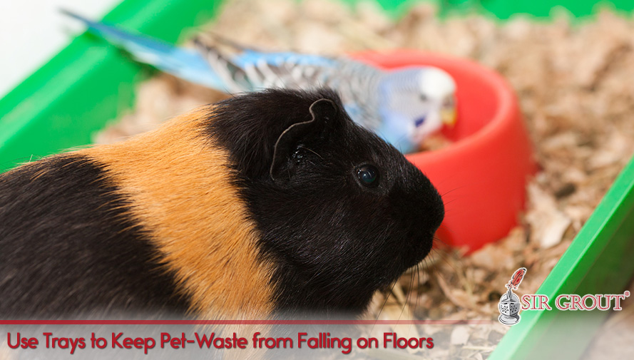 Use Trays to Keep Pet-Waste from Falling on Floors